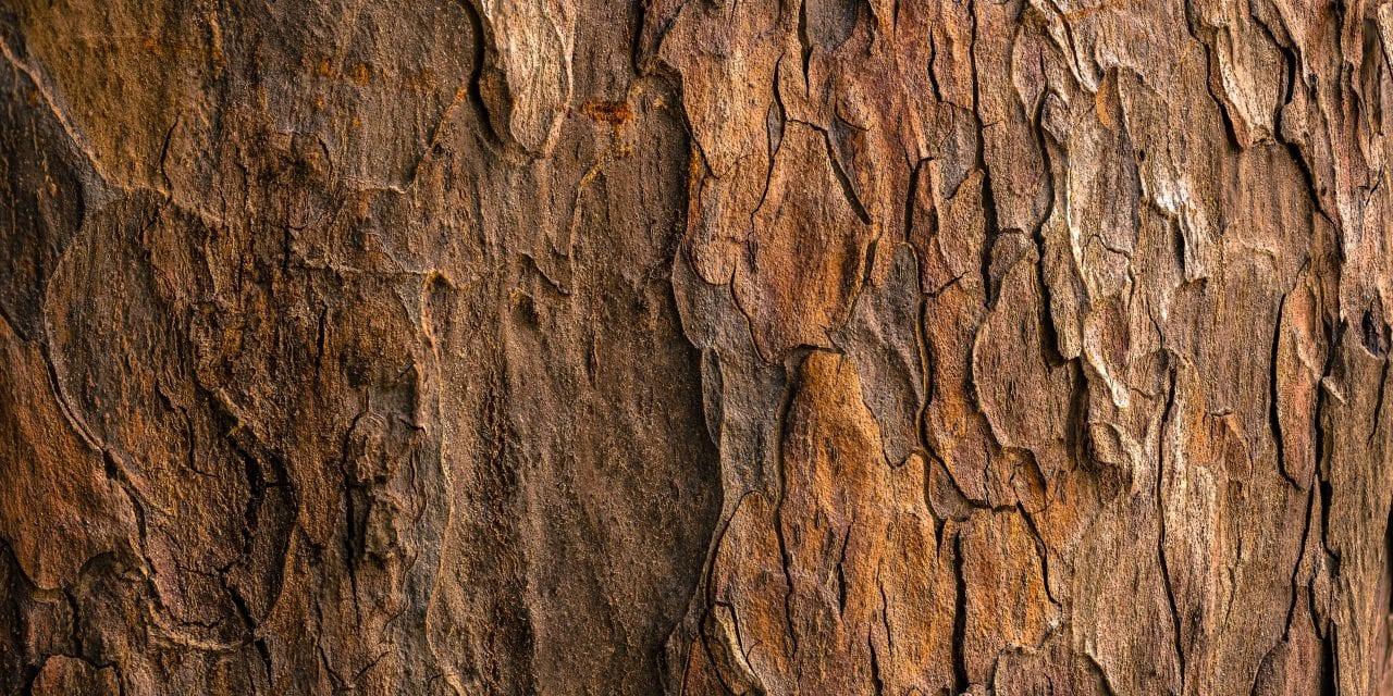 Waldlehrpfad am Altvater Lahr