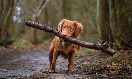 Mit Hund in der Ortenau