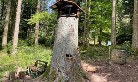 Wald- und Erlebnispfad Bächlewald Haslach im Kinzigtal